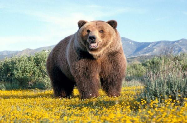 giải đáp nằm mơ thấy con gấu đánh con gì?