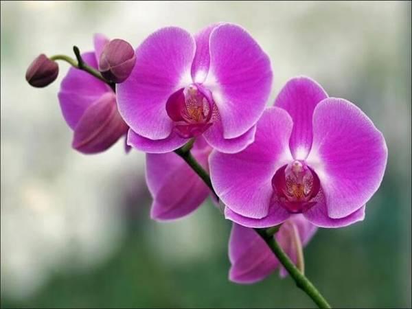 Mơ thấy hoa lan là điềm báo điều gì?