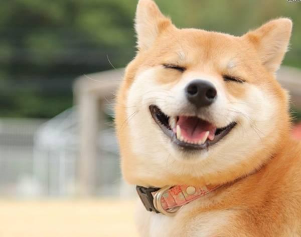 Chó chạy vào nhà đánh con gì? Gặp chó vào nhà đánh số mấy